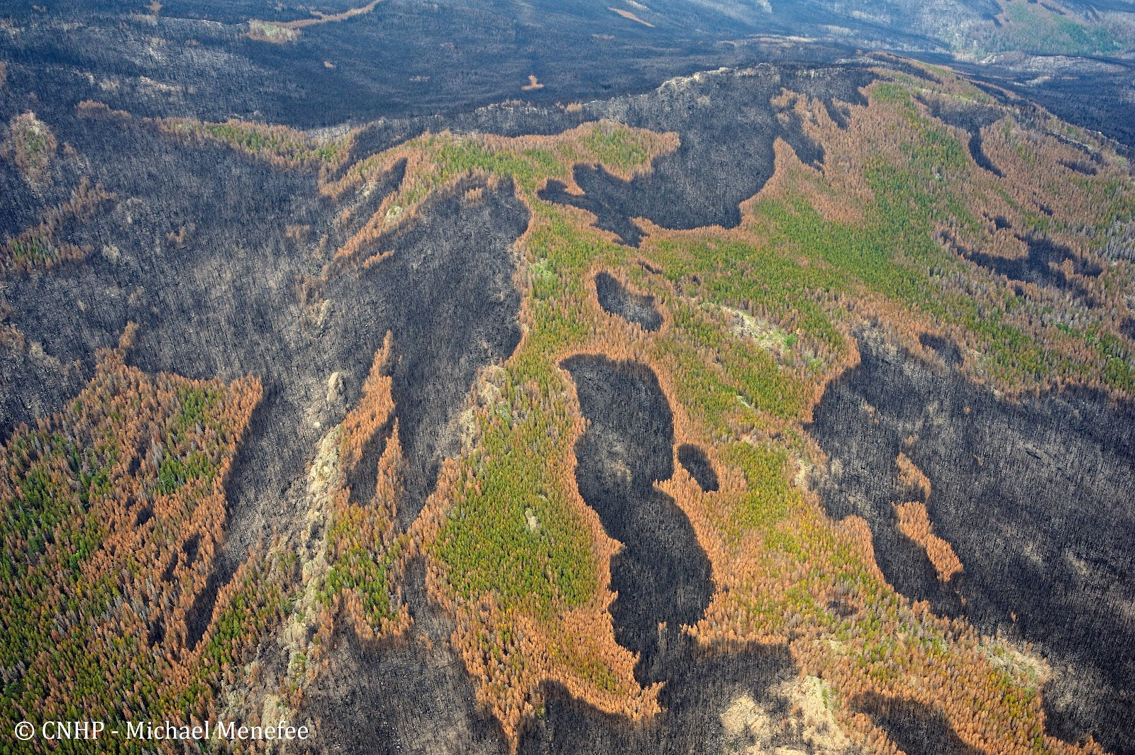 West White Pine Mountain after wildfire from the air.