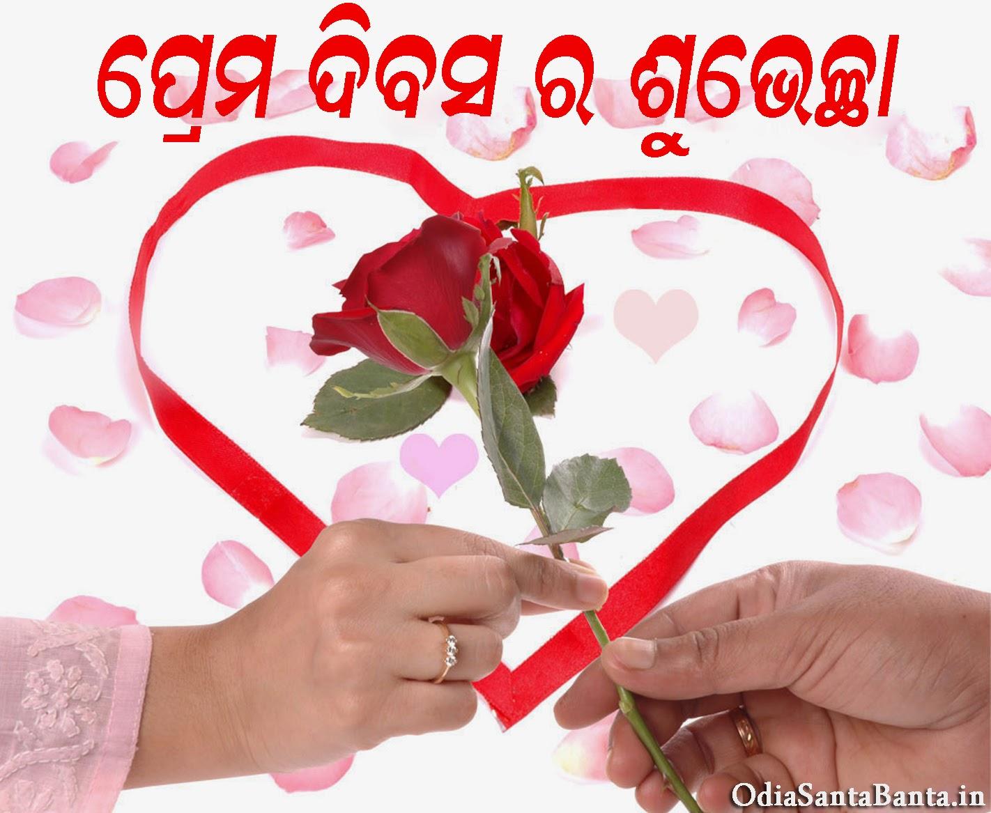 Calendar Rose Day : Odia rose images search results calendar