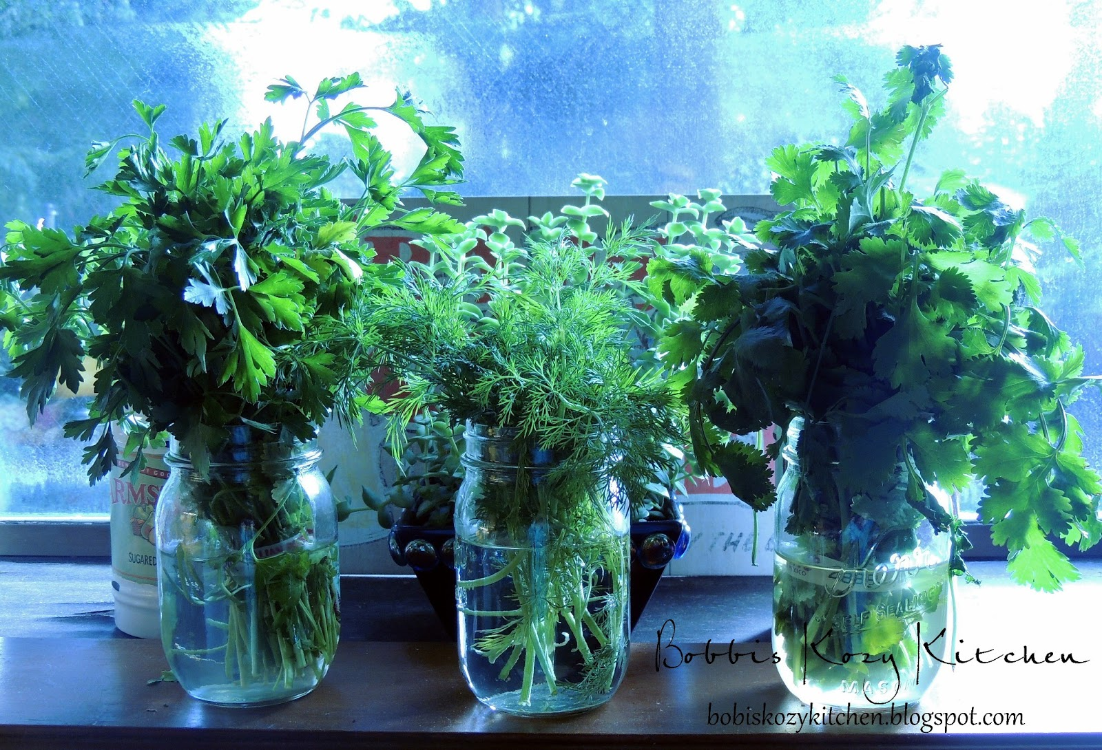 how to store fresh cut herbs