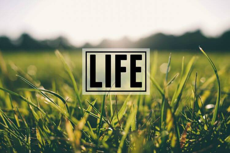 Life Page Header