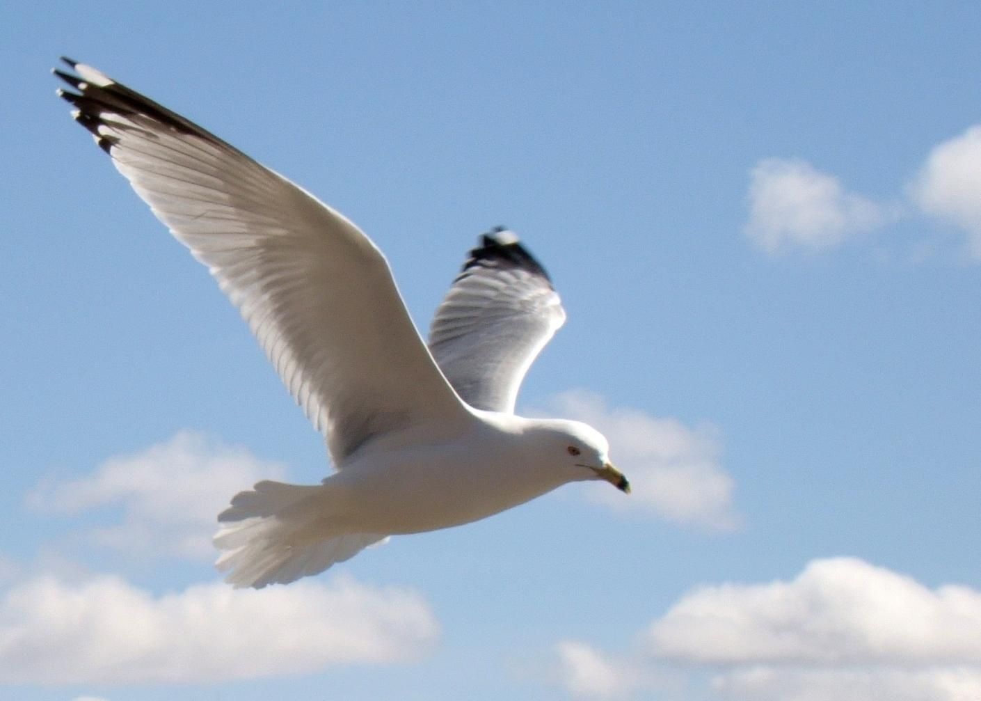คำ นาม แปล ว่า นก นางนวล นก