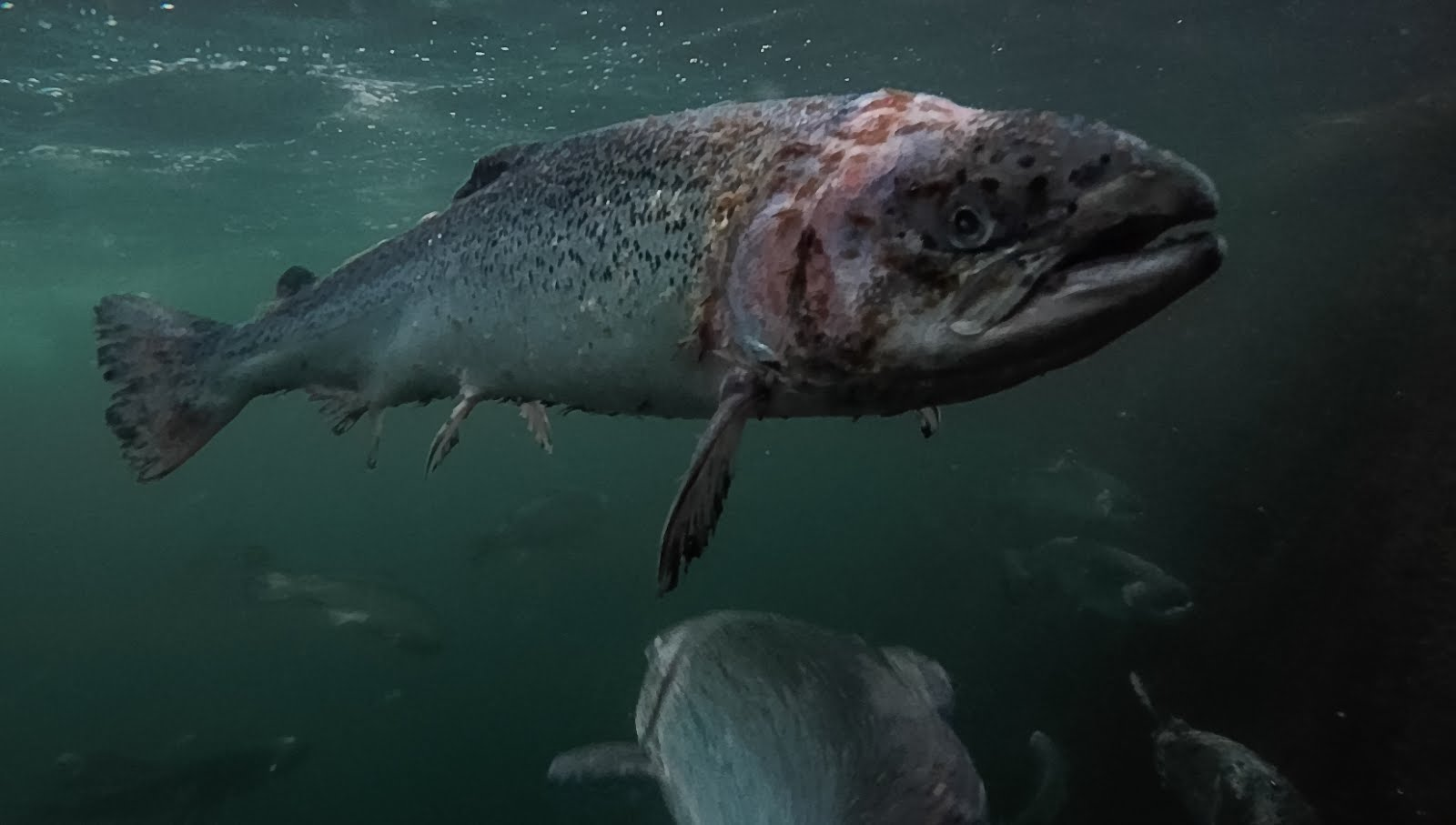 SIGN PETITION<br>Stop Europe's Dirty Fish Farms - <br>This petition is run by Patagonia