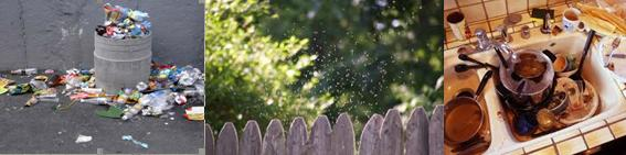 gnats come outdoor, indoor and outdoor sources