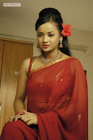 Tanu-Roy-Latest-Stills-in-Saree