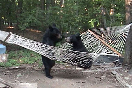 hammock hanging bears carolina appalachian trail mom  hammock hanging bears  rh   carolinaatmom blogspot