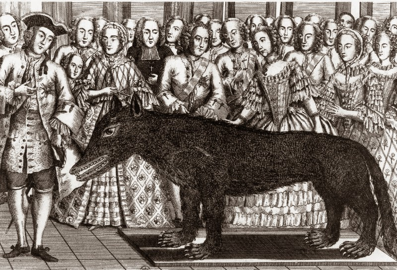Stuffed wolf shown to King