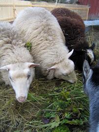 Alli, Salli ja Suklaa