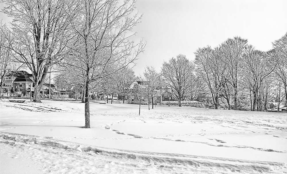 Victoria Park covered in snow showing some of the houses on Coldwater.