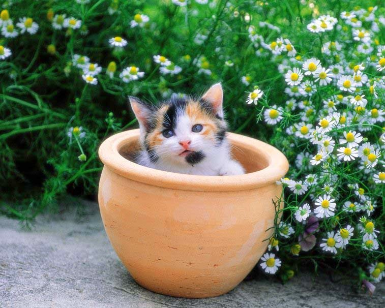 kitten-pot-flowers