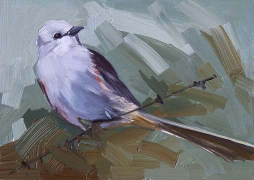 Scissor-tailed Fly Catcher and a Swan - Two Oil Studies for Today
