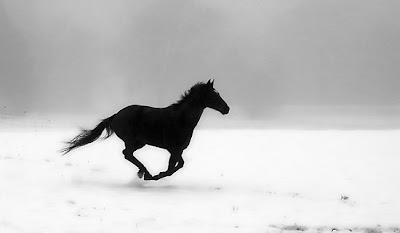 Cavalo, Horse, Liberdade, Liberté, Freedom