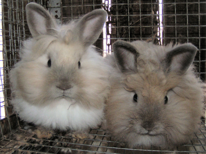 Cutest rabbit breeds