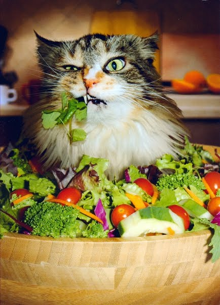 sphynx cat mn