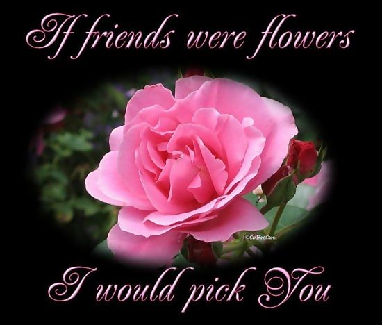 Results wallpaper friendship day flower wallpapers - Flowers that mean friendship ...