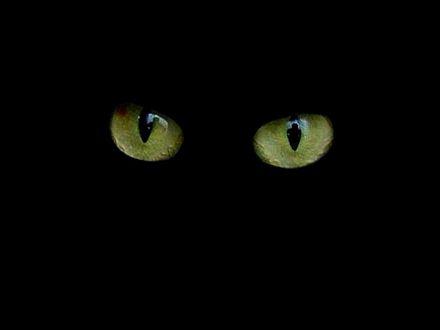 Los ojos del gato pardo