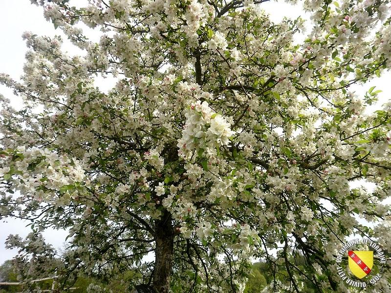 VILLERS-LES-NANCY (54) : Le jardin botanique du Montet-Pommier à fleurs