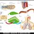 Intercambio de gases en plantas y animales