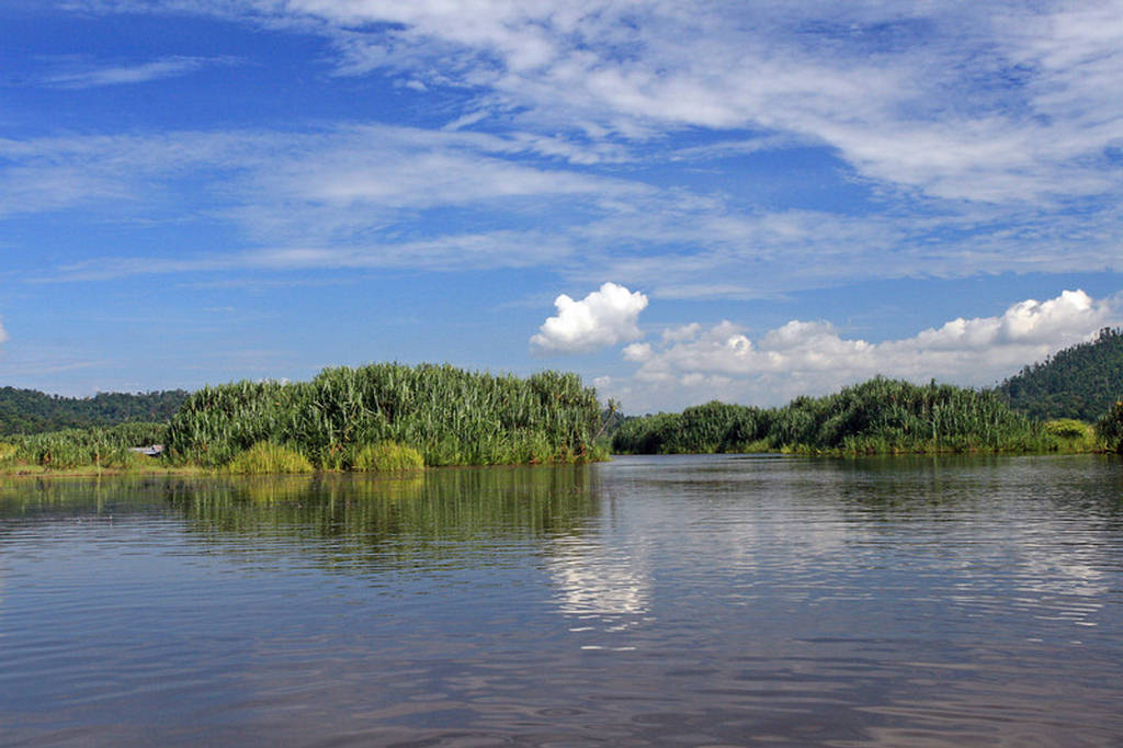 Chini Lake Malaysia Images
