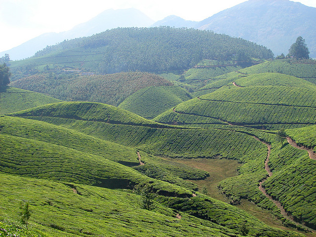 budget tours and reavel. Book your munnar trip today. just leave your contact detal with the help of contact form we will cantact uuu....