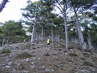 La sagra por el bosque vertical