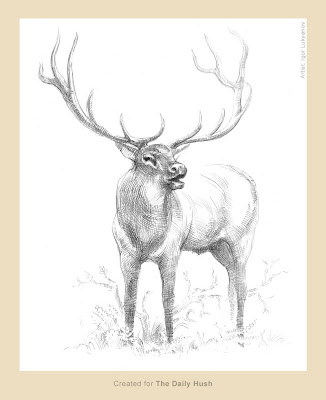 elk sketch, pencil drawing