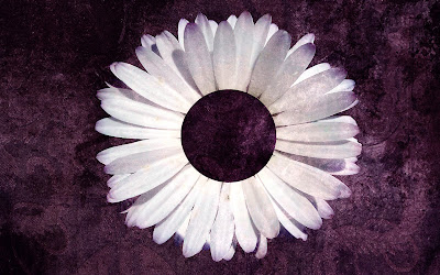 Purple Daisy Tumblr Backgrounds (4).jpg