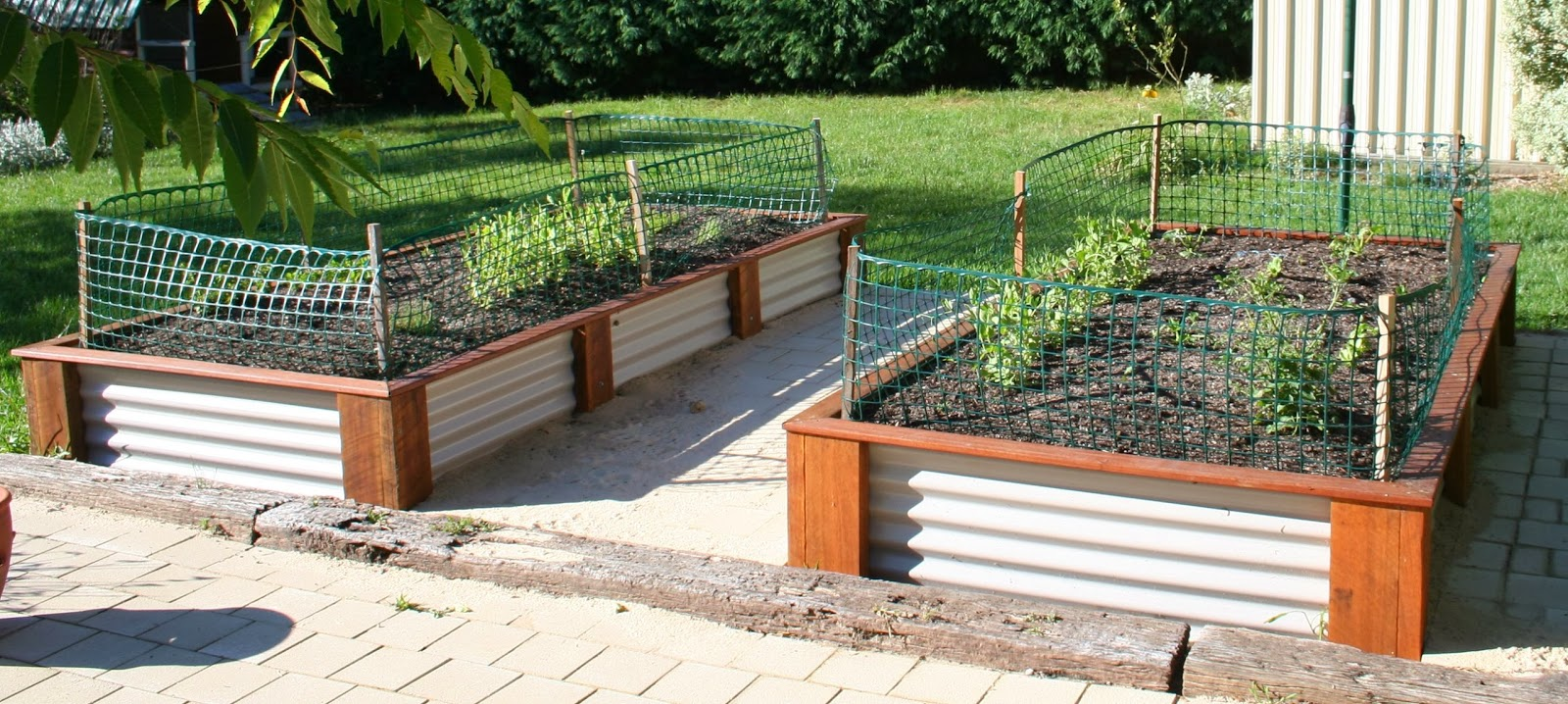Corrugated iron raised garden beds corrugated iron Raised garden beds