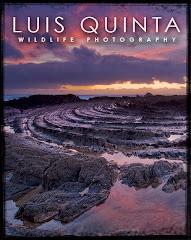 Luis Quinta Photography