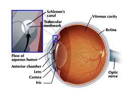 obat glaukoma tradisional