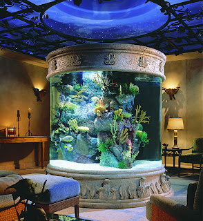 merawat+akuarium Tips Merawat Ikan di Akuarium