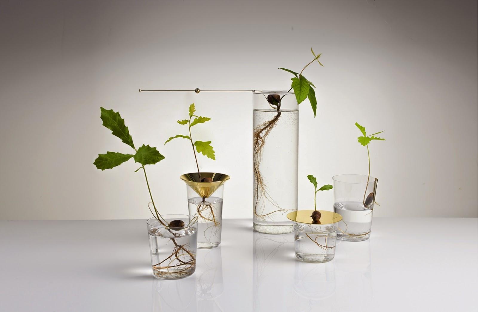Jardins minimalistas larissa carbone arquitetura for Plantas minimalistas