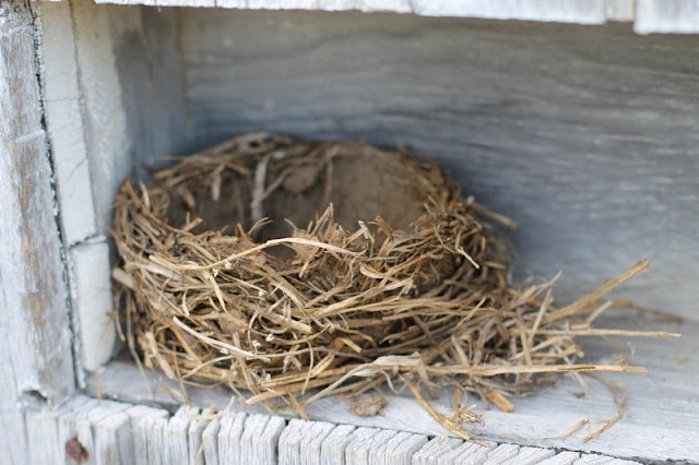 Bird's nest found in the hay feeder, now in a cubby on the sheep shed