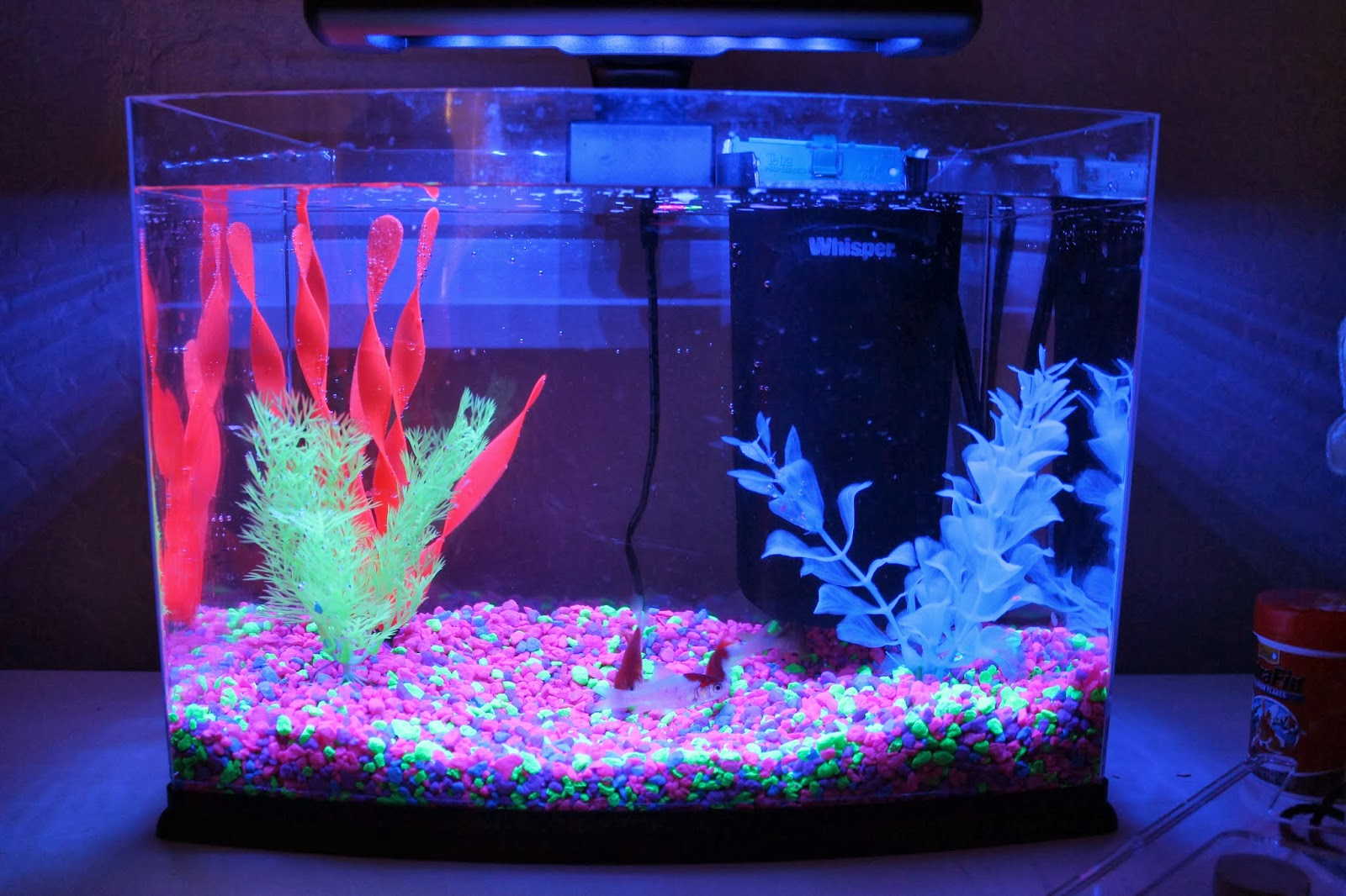 Fish aquarium is good in home - Glow In The Dark Fish Tank Xander Ideas Pinterest Tanks Fish Tanks And Fish