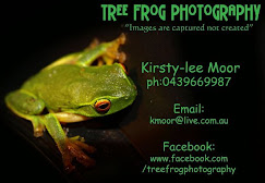 13. Tree frog photography