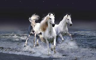 mystic horses (53)