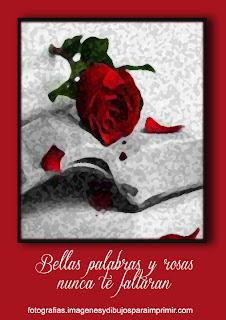 palabras y rosas rojas Fotos de rosas rojas para facebook
