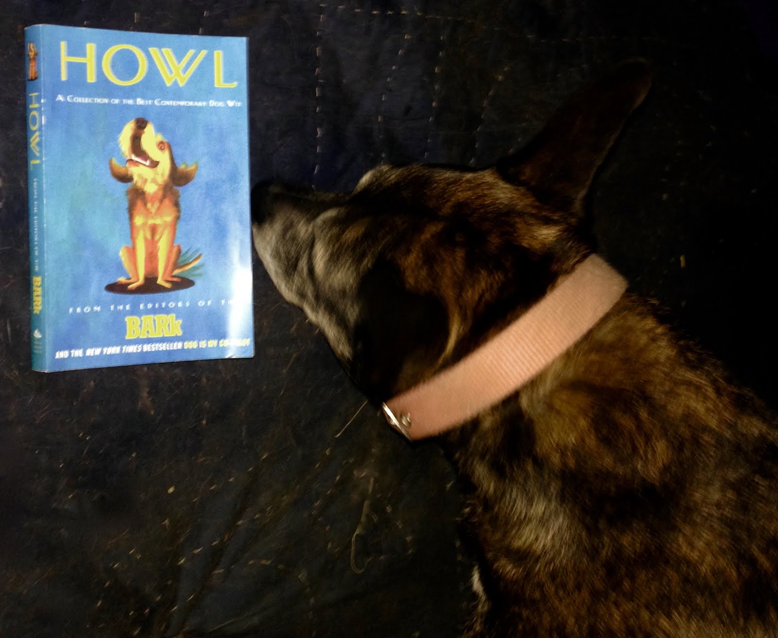 DOGS DIG BOOKS @ John's Rare Books and Collectibles
