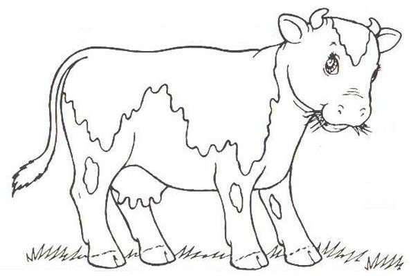 bird coloring pages realistic cows - photo#18