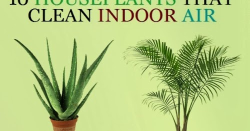 Fresh Indoor Air Garden and Farms: 10 H...