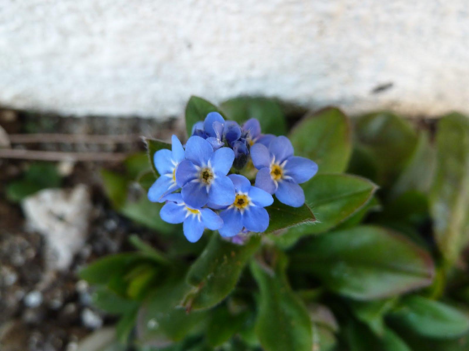 3 月 15 日 誕生 花