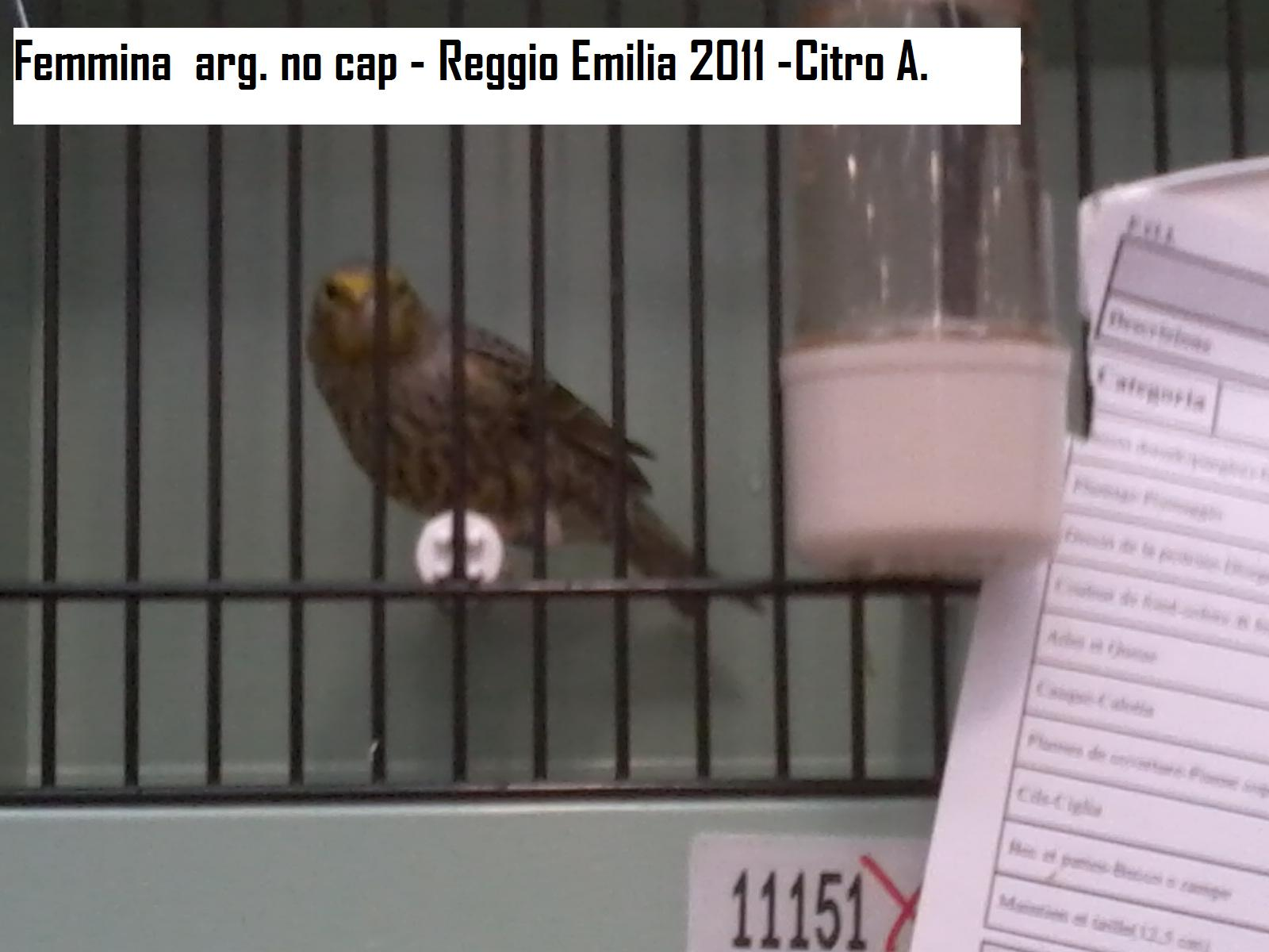 Allevamento del canarino lizard iii classificato stamm argentato cap reggio emilia 2011 - Cap bagno reggio emilia ...