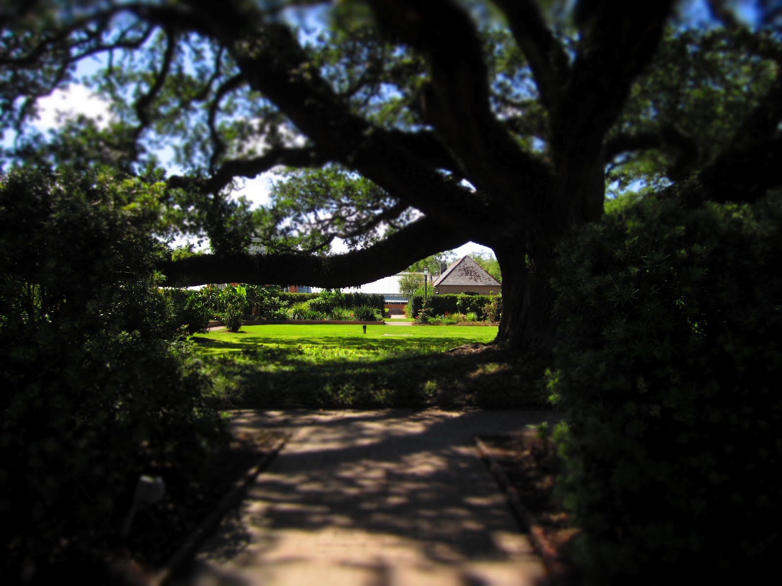 New Orleans Botanical Garden Conservatory New Orleans Botanical Garden Oak