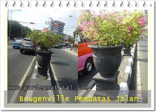tanaman pot pembatas jalan