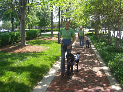 Picture of Rudy in coat/harness doing a forward walk with me