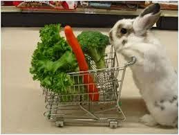 Makanan Kelinci