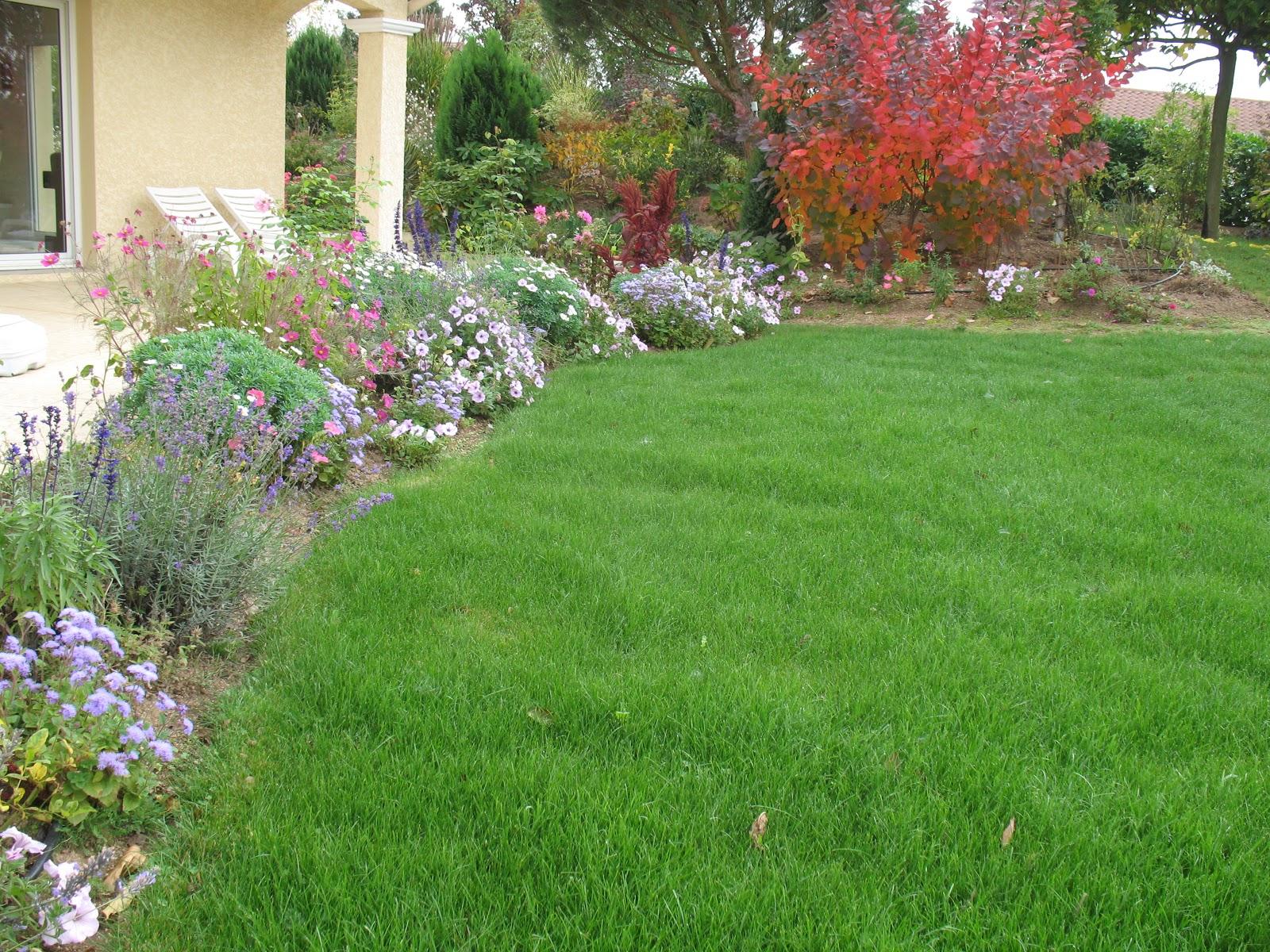 roses du jardin ch neland salvia mystic spires blue. Black Bedroom Furniture Sets. Home Design Ideas