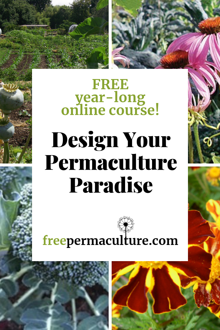 Learn Permaculture For Free!