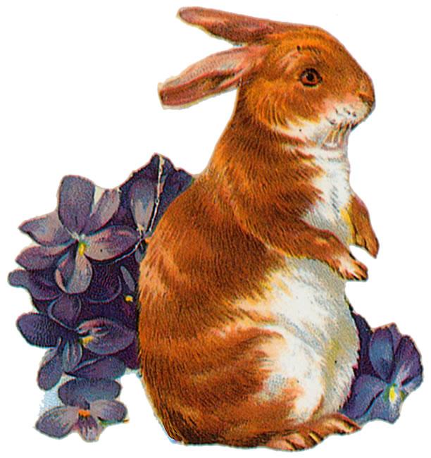 Vintage Rabbit - Shutterstock