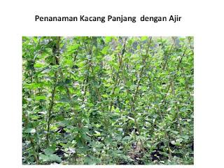 http://tipspetani.blogspot.com/2015/07/cara-menanam-kacang-panjang.html
