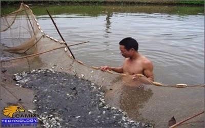 Xử lý nước ao nuôi cá
